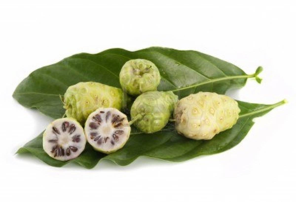 Noni – Sucos de Noni para Emagrecer – Benefícios Noni Fruta