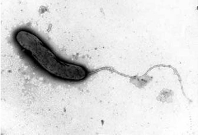 Vacina Contra a Cólera (Injetável)