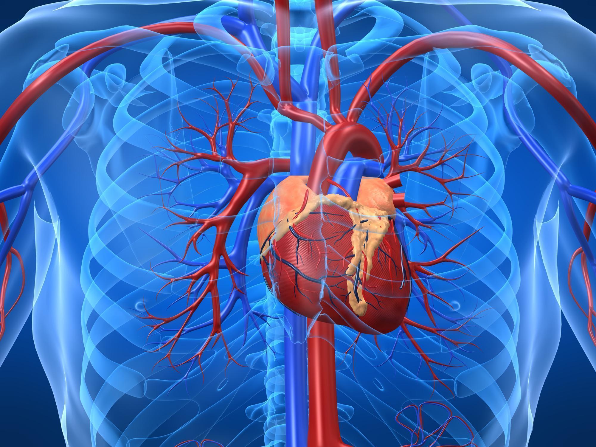 Pessoas Baixas Têm Mais Risco de Sofrer com Doenças Cardiovasculares