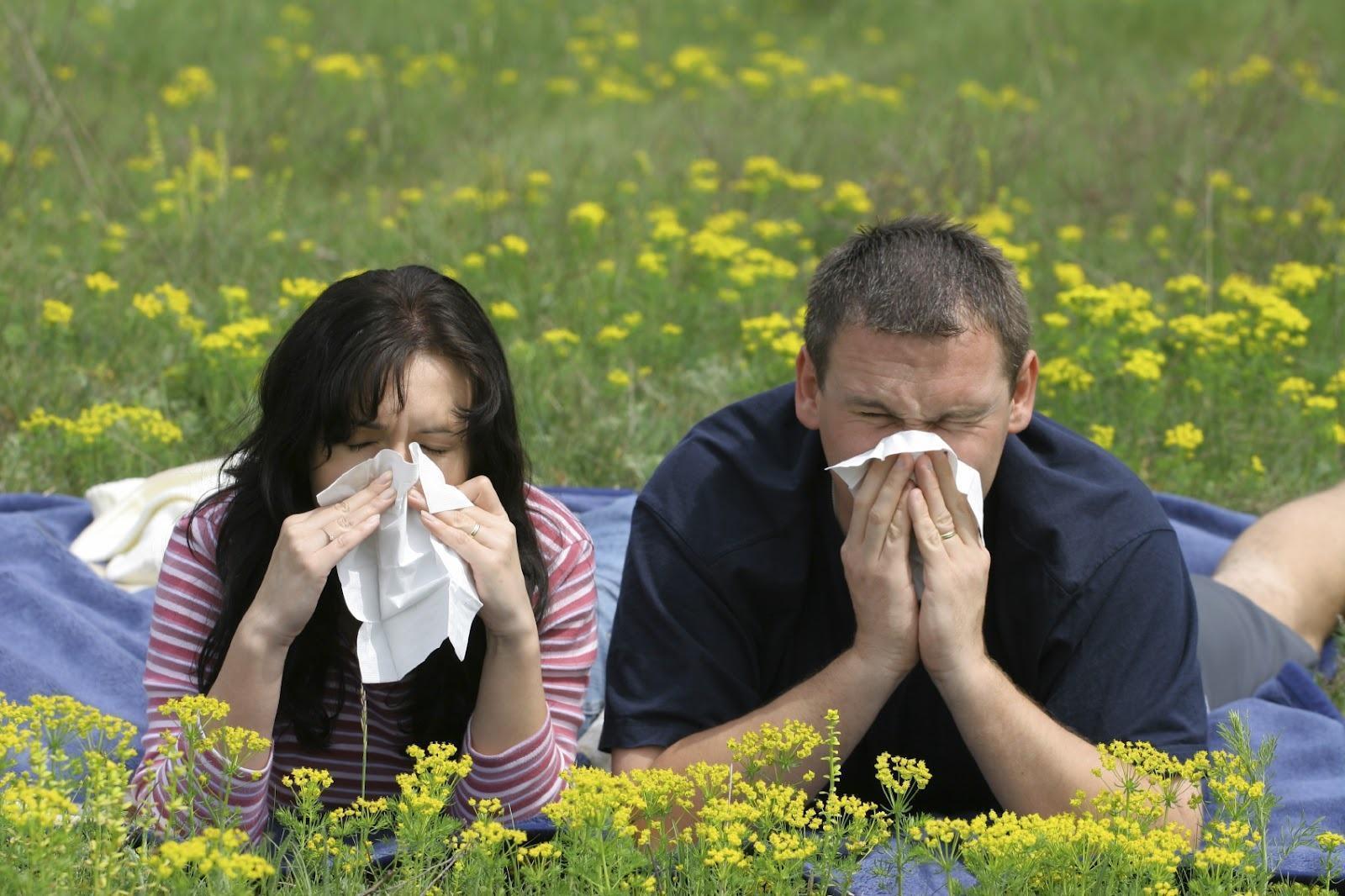 As Alergias Mais Comuns