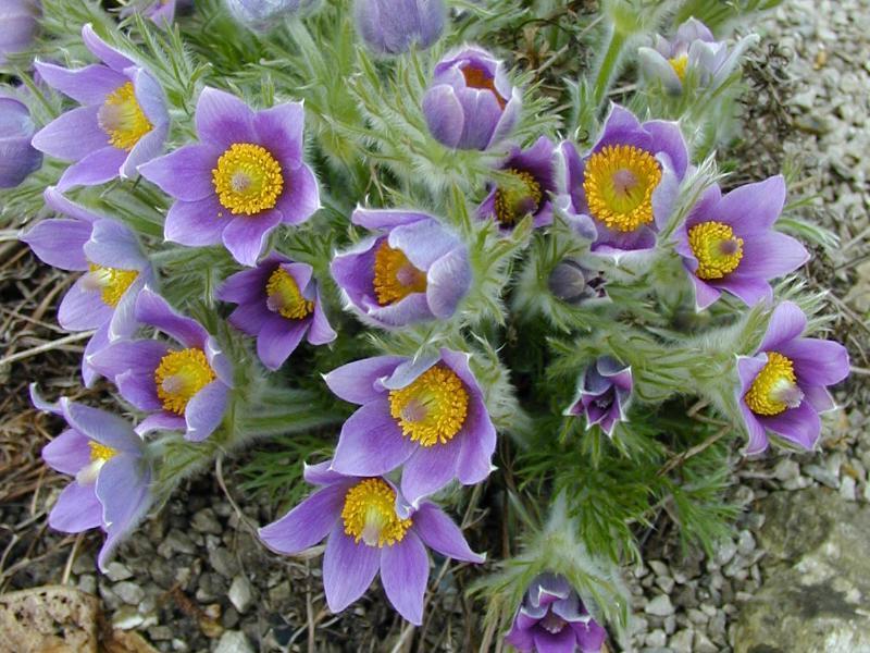 Remédio para as Provas Finais a Base de Flores