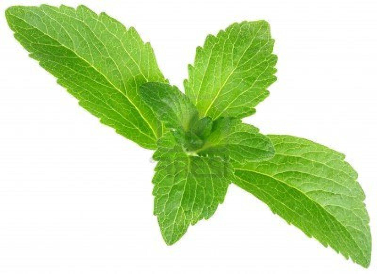 Stevia – um Adoçante Natural Chamado Stevia