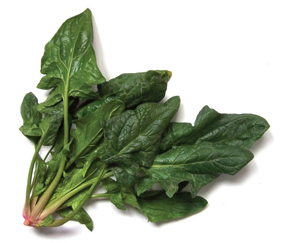 Dieta do Espinafre Para Emagrecer – Como fazer a Dieta de Espinafre para Perder Peso