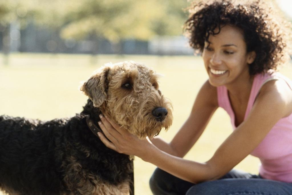 Alergia a Animais – Sintomas de Alergia a Animais de Estimação Cão, Gato