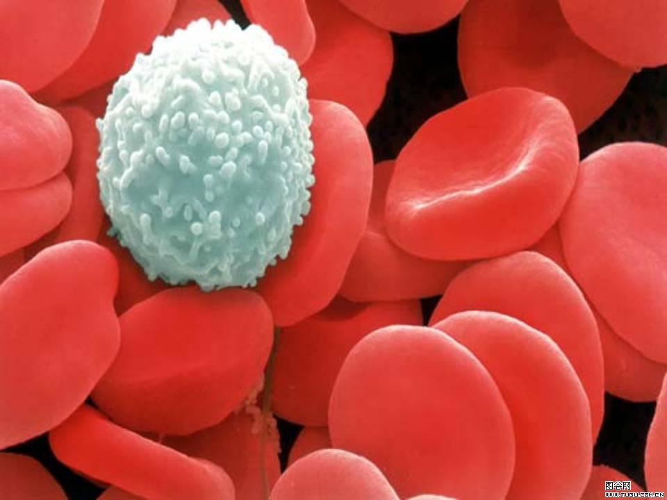 Anemia – O Que é, Sintomas e Quais os Tipos de Anemia