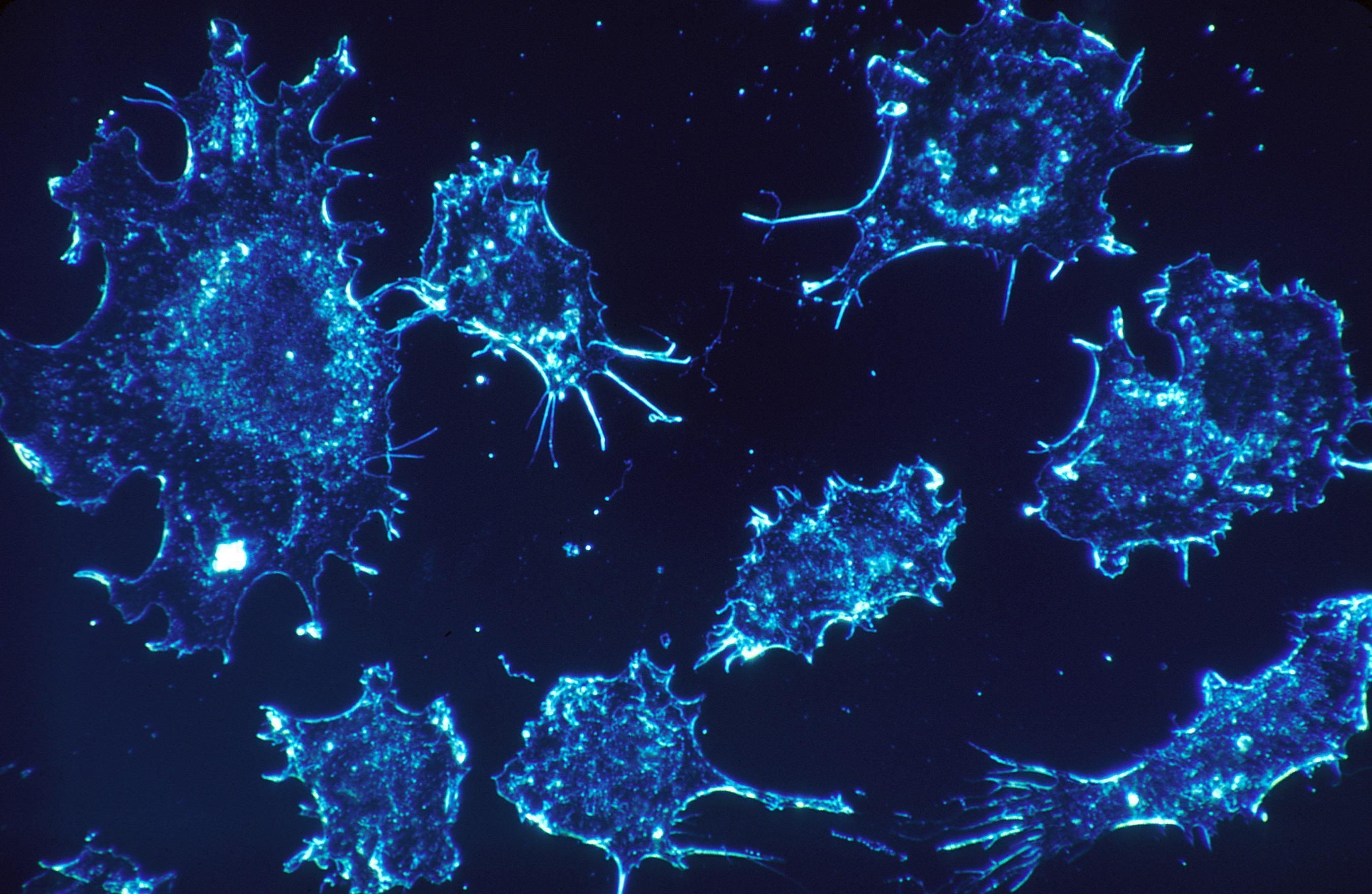 Como Fortalecer o Sistema Imunológico