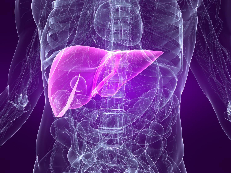 Por Que o Fígado é Importante?