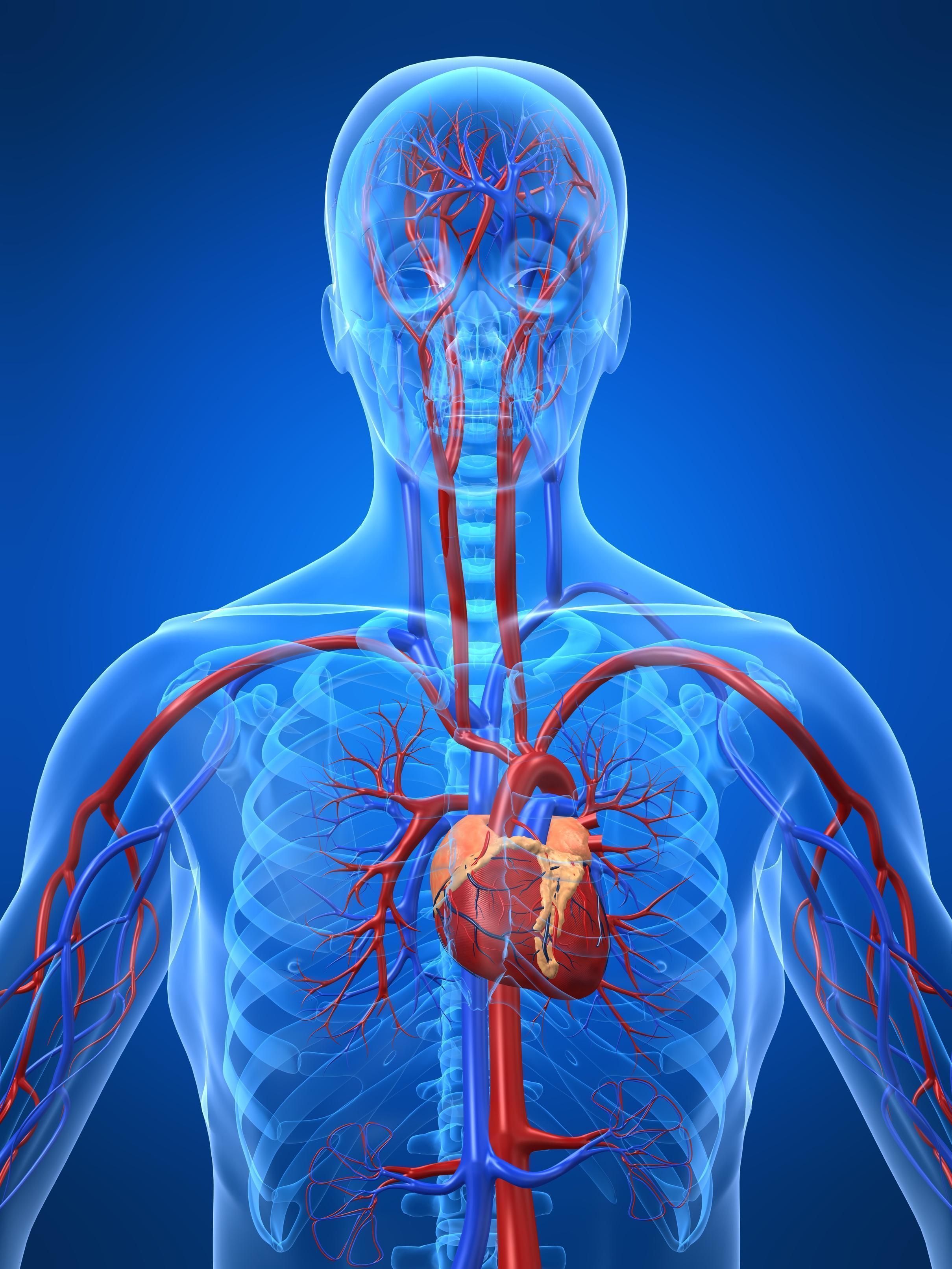 Arteriosclerose: Remédios Caseiros Para Arteriosclerose