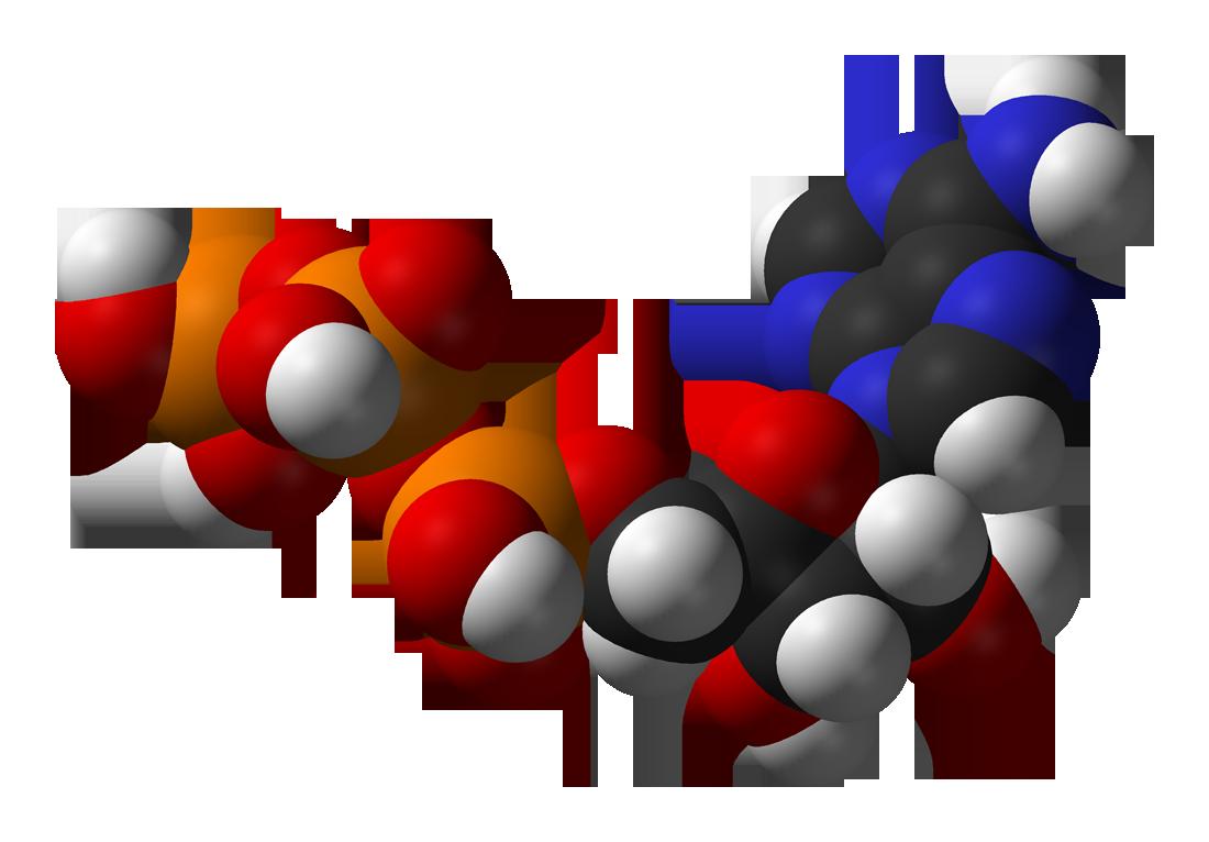 O ATP E Os Processos De Energia