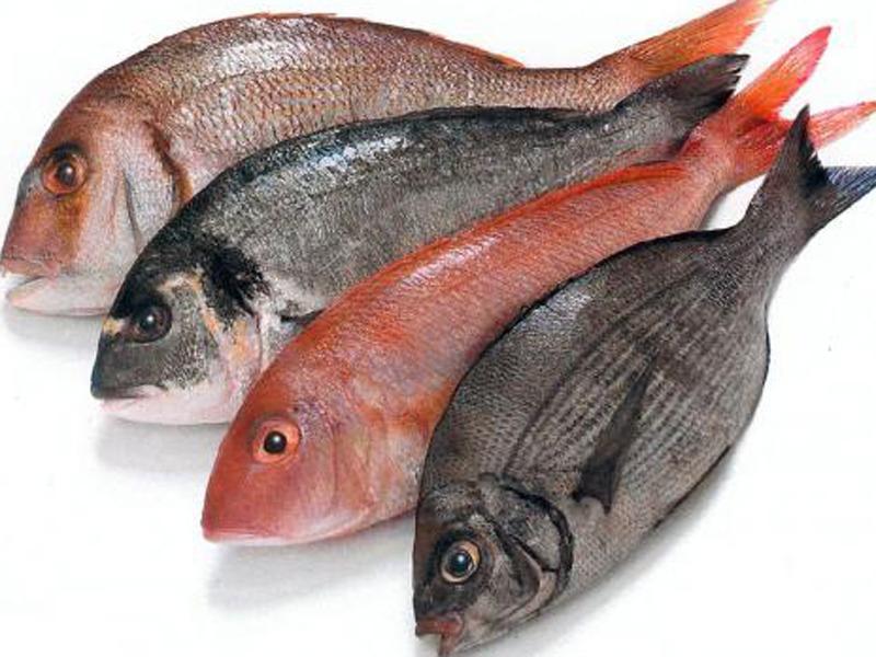 Fígado de Peixe, Uma Fonte de Saúde