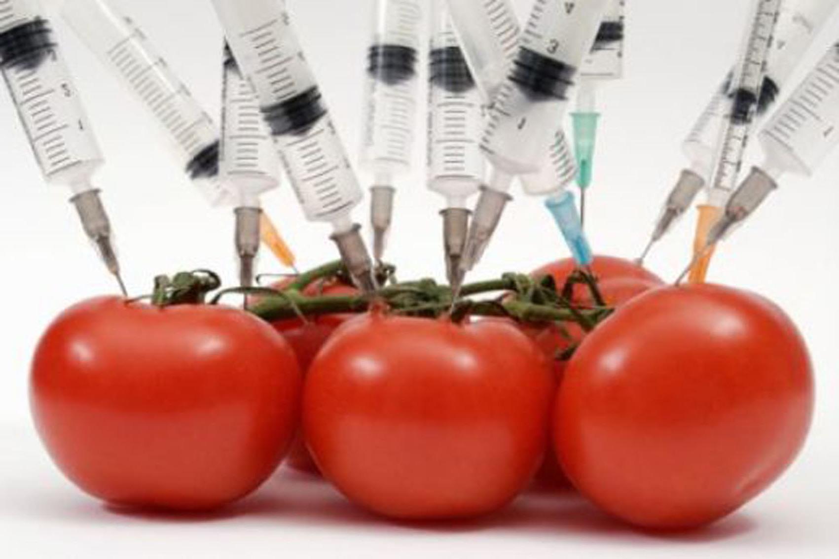 Alimentos Transgênicos: Conheça Mais Sobre os Alimentos Transgênicos e Seus Benefícios