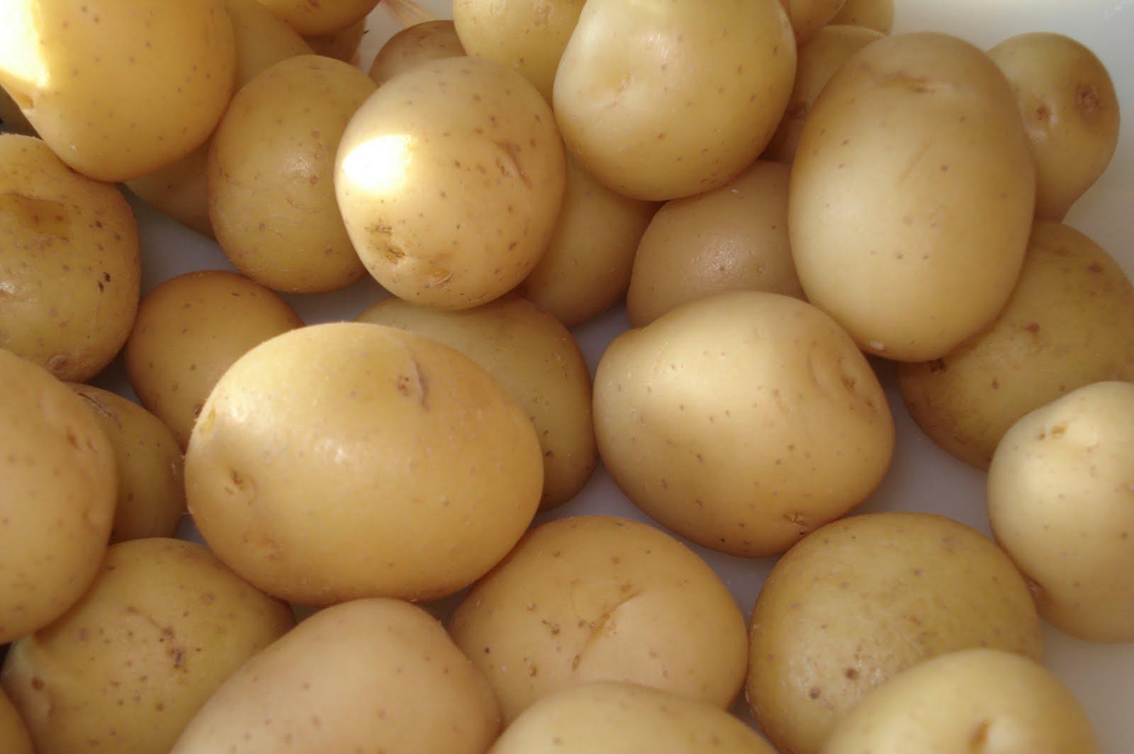Batata – O Que É, Benefícios da Batata e Batata Engorda?