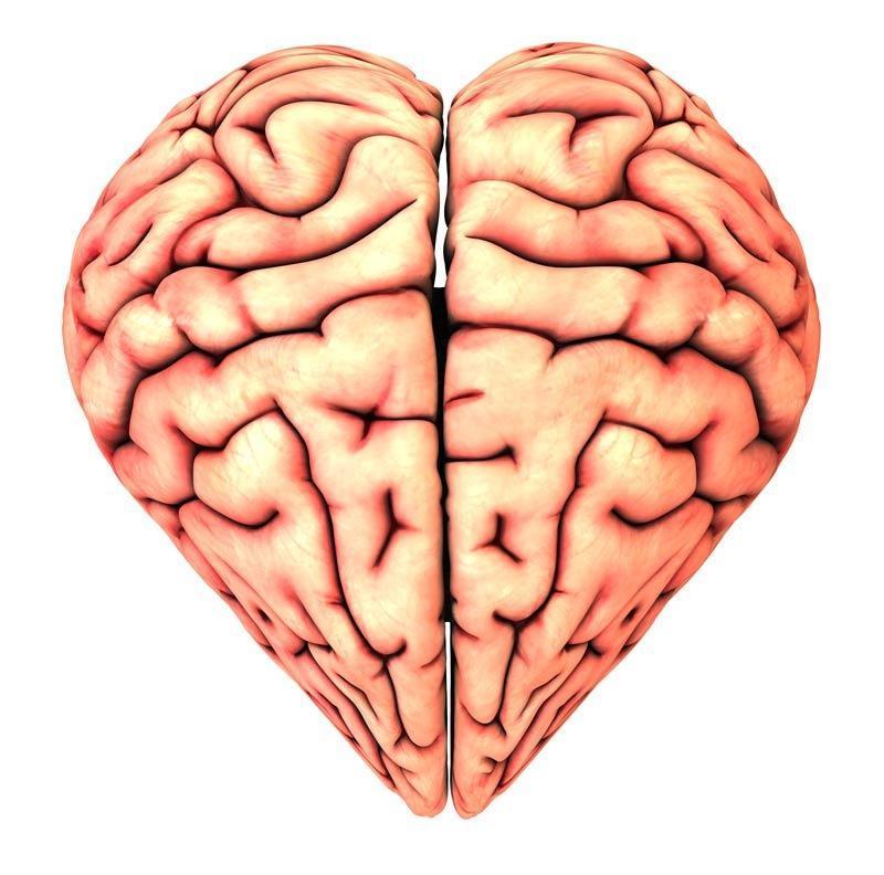 O Que é o Cérebro Emocional?