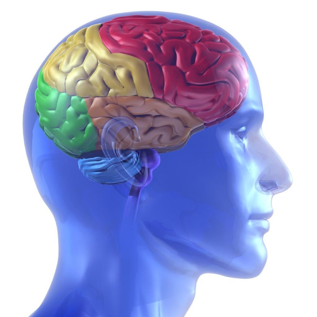 Quais São as Principais Partes e Funções do Cérebro?