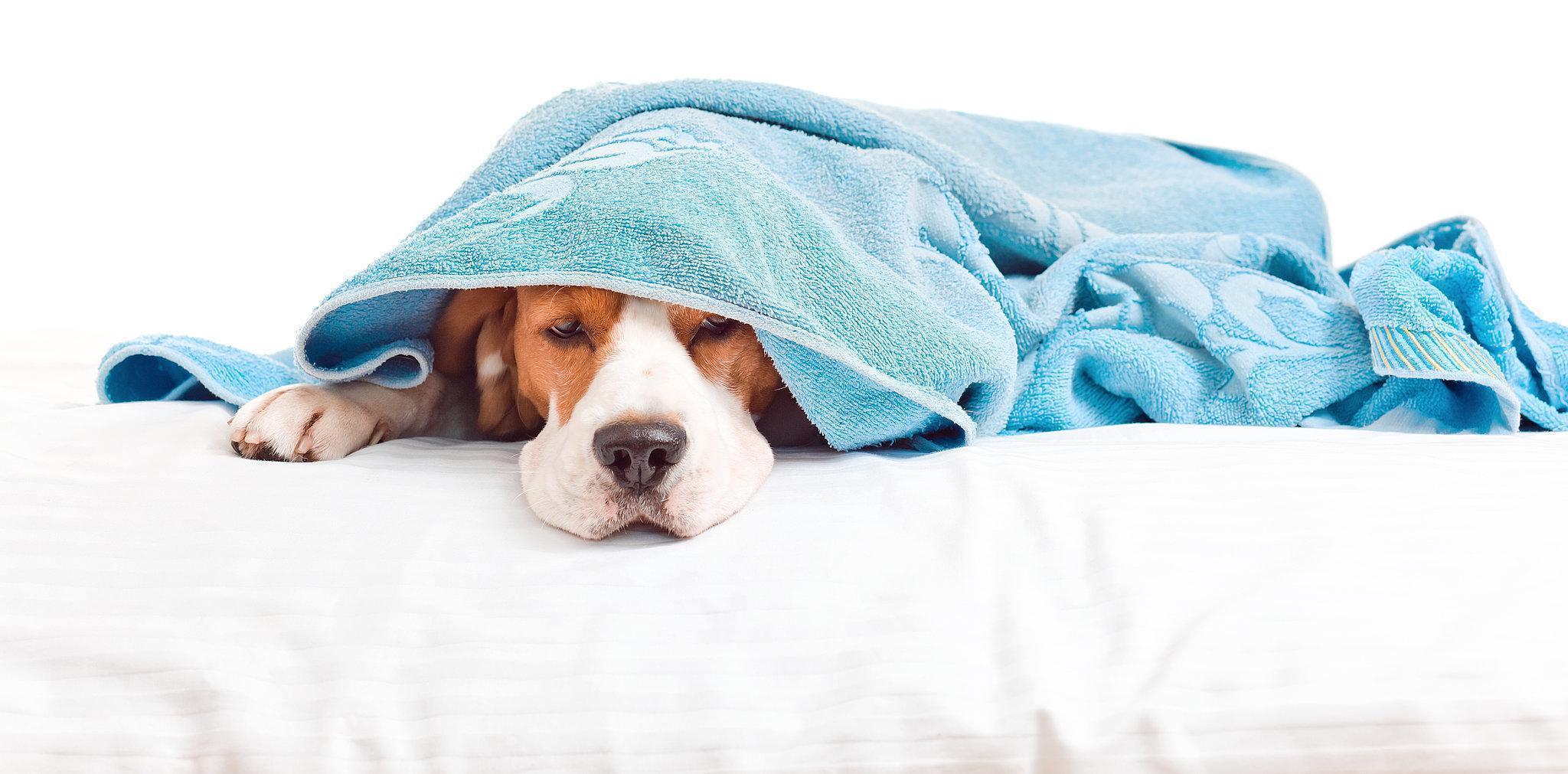 Será Que Todos os Animais de Estimação Podem Causar Alergias?
