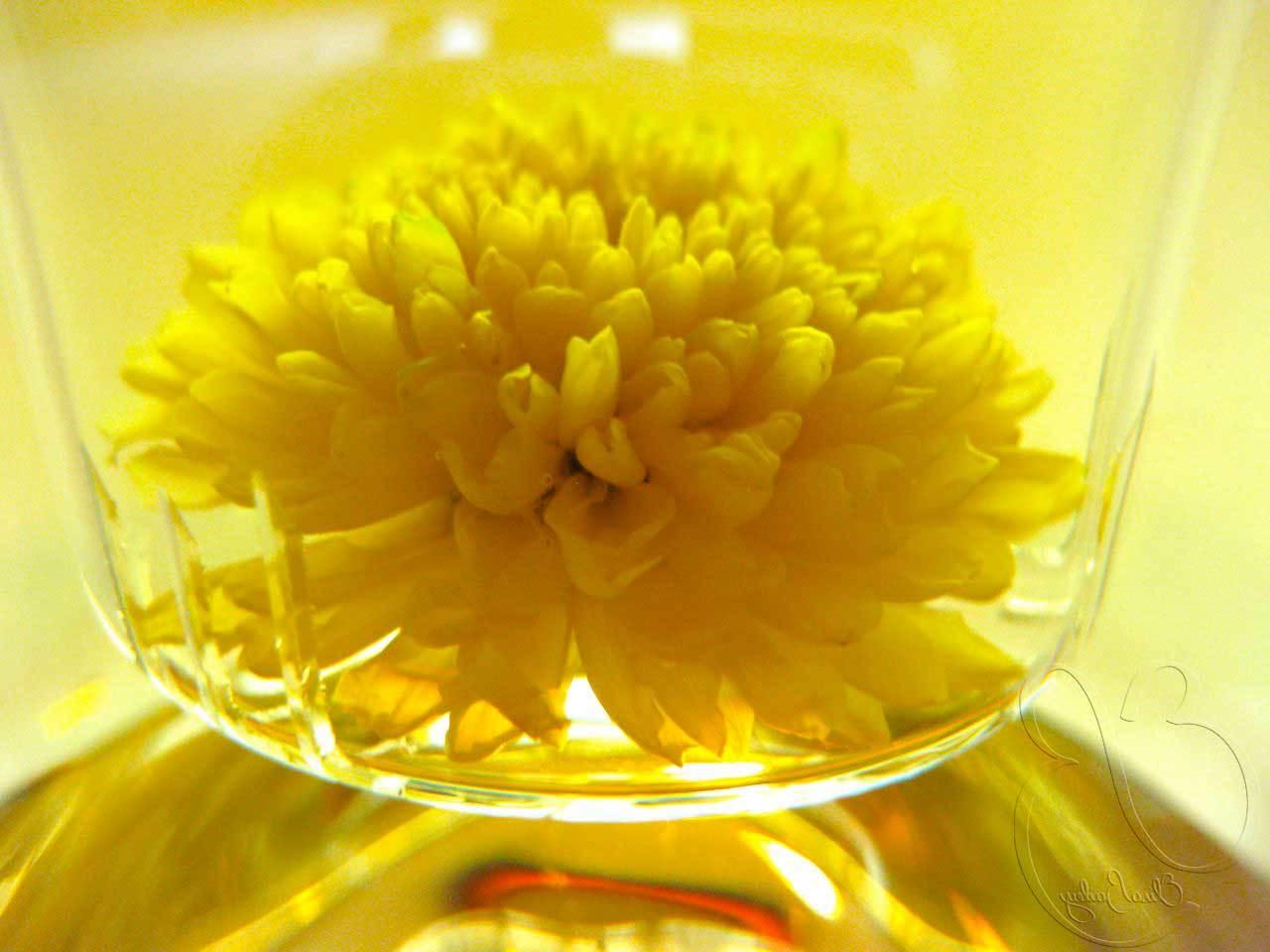 Chá de Crisântemo Para Reduzir os Sintomas da Gripe
