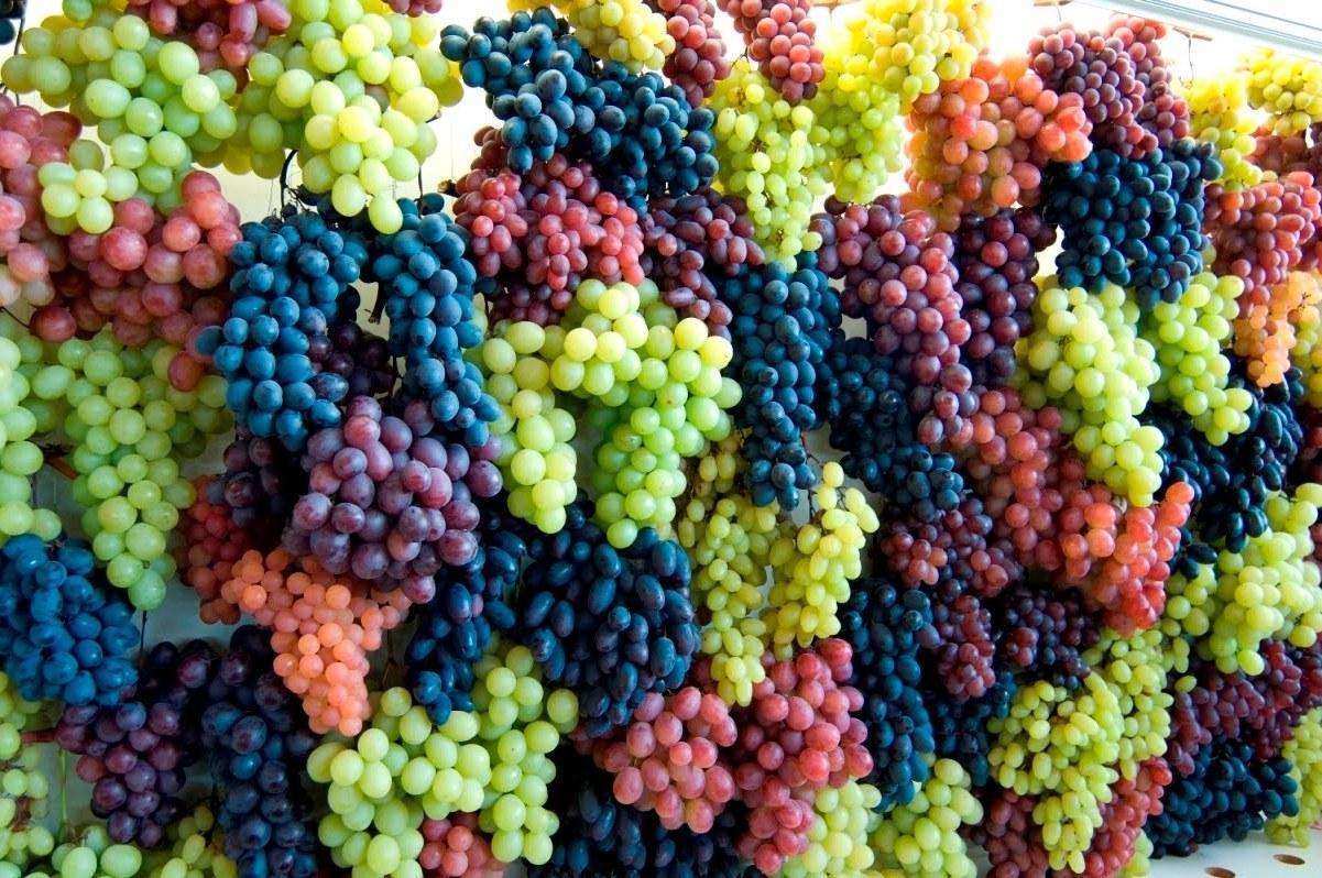 Benefícios e Propriedades das Uvas