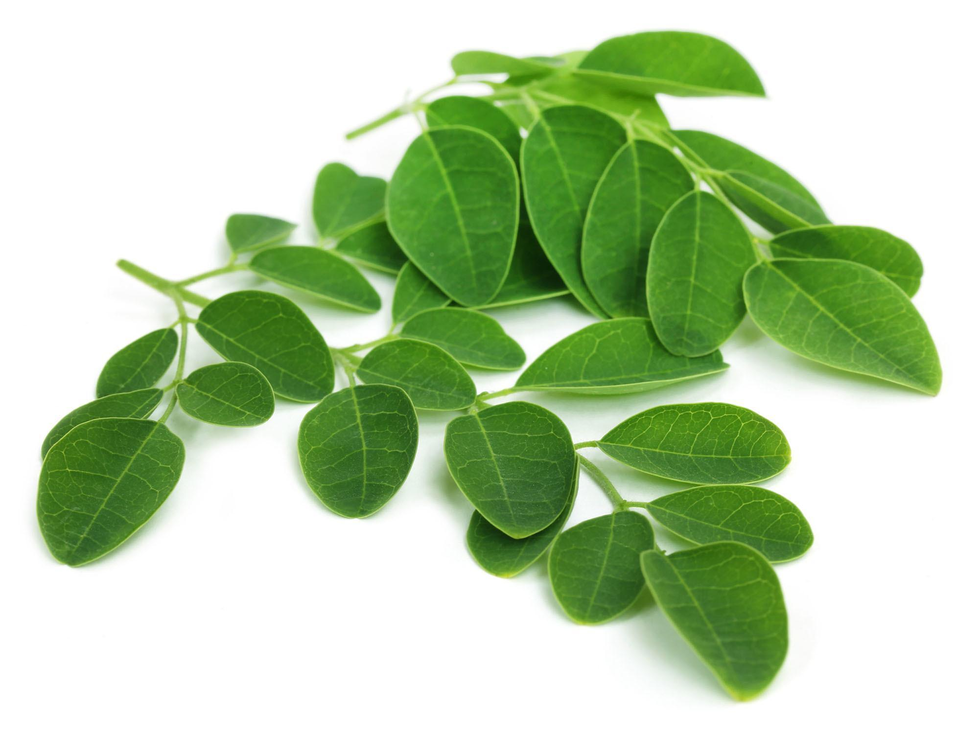 Benefícios e Propriedades da Moringa Para a Saúde