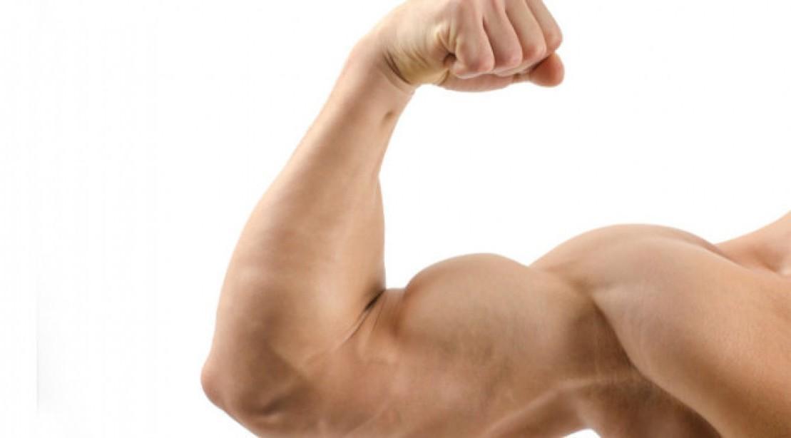 Os Melhores Exercícios Para Bíceps