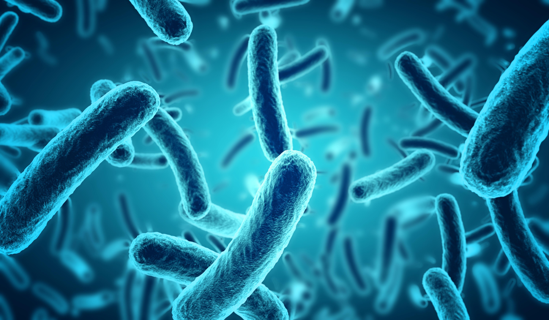 Remédio Caseiros Para Escherichia coli ou E. Coli
