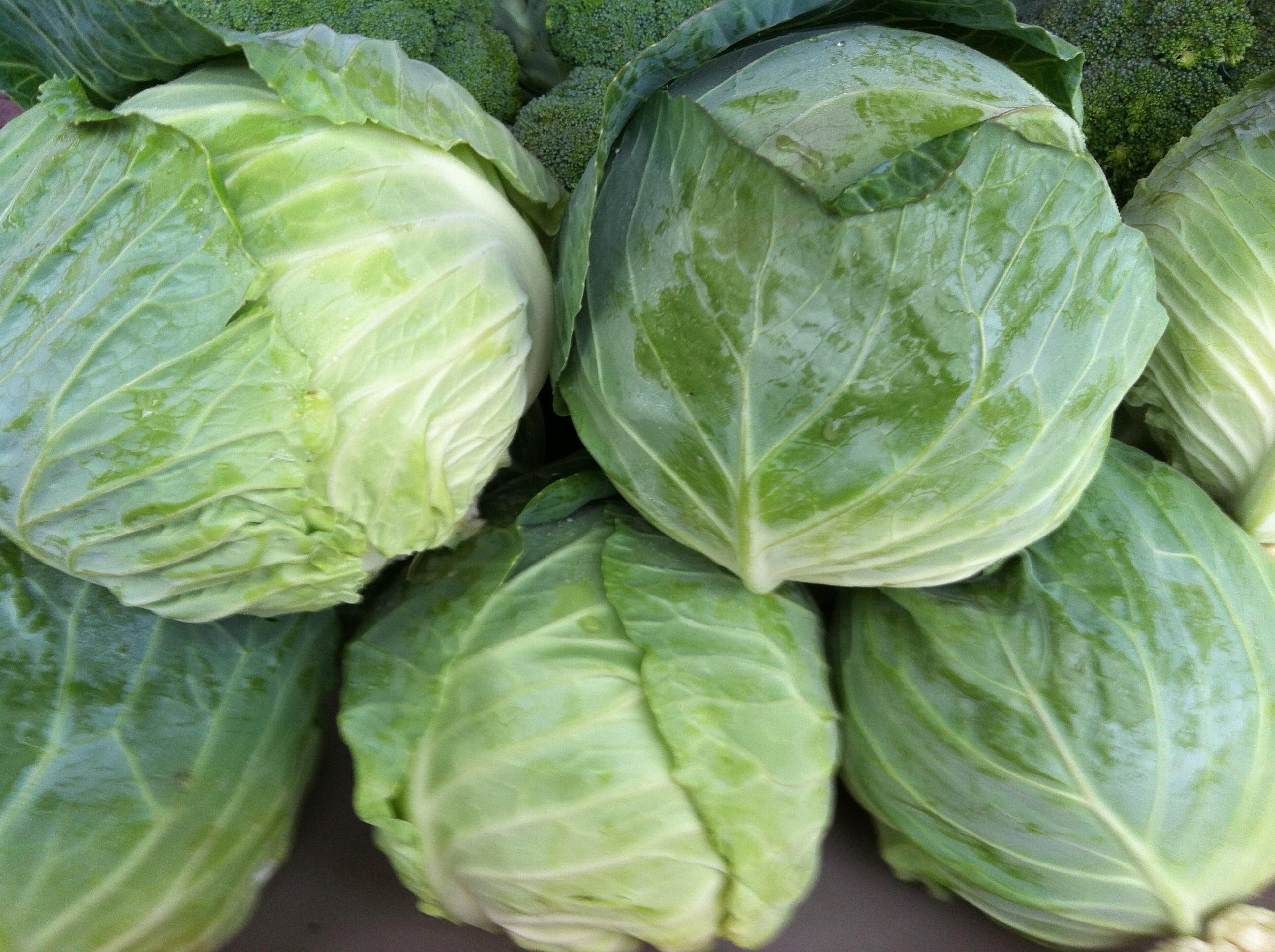 Repolho: Valor Nutricional, Propriedades Depurativas e Receitas Para Emagrecer