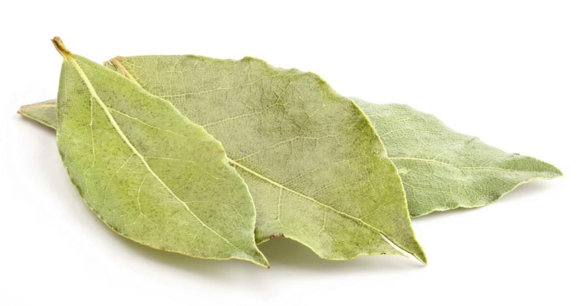 Benefícios da Folha de Louro Para a Nossa Saúde