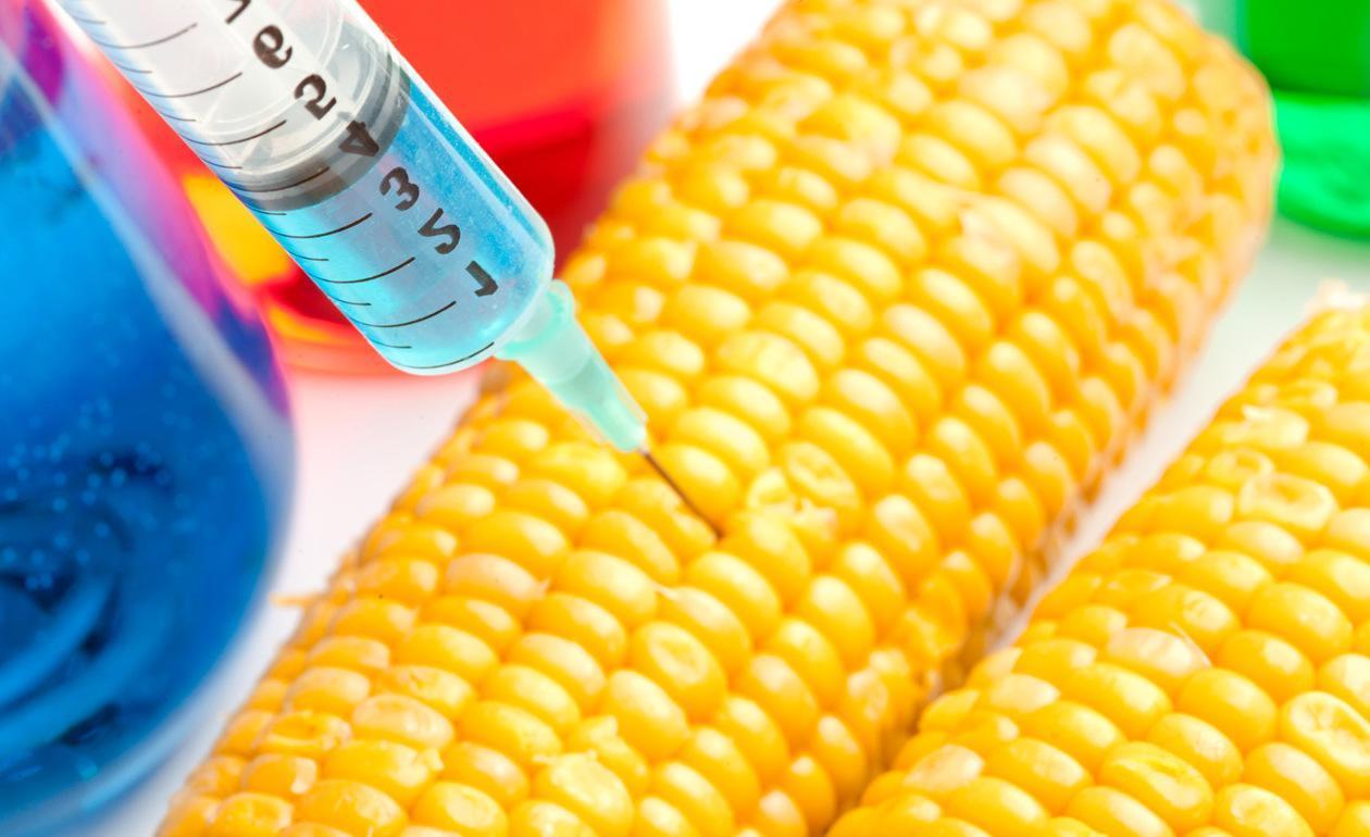 Os Alimentos Transgênicos: Aliados ou Inimigos da sua Saúde?