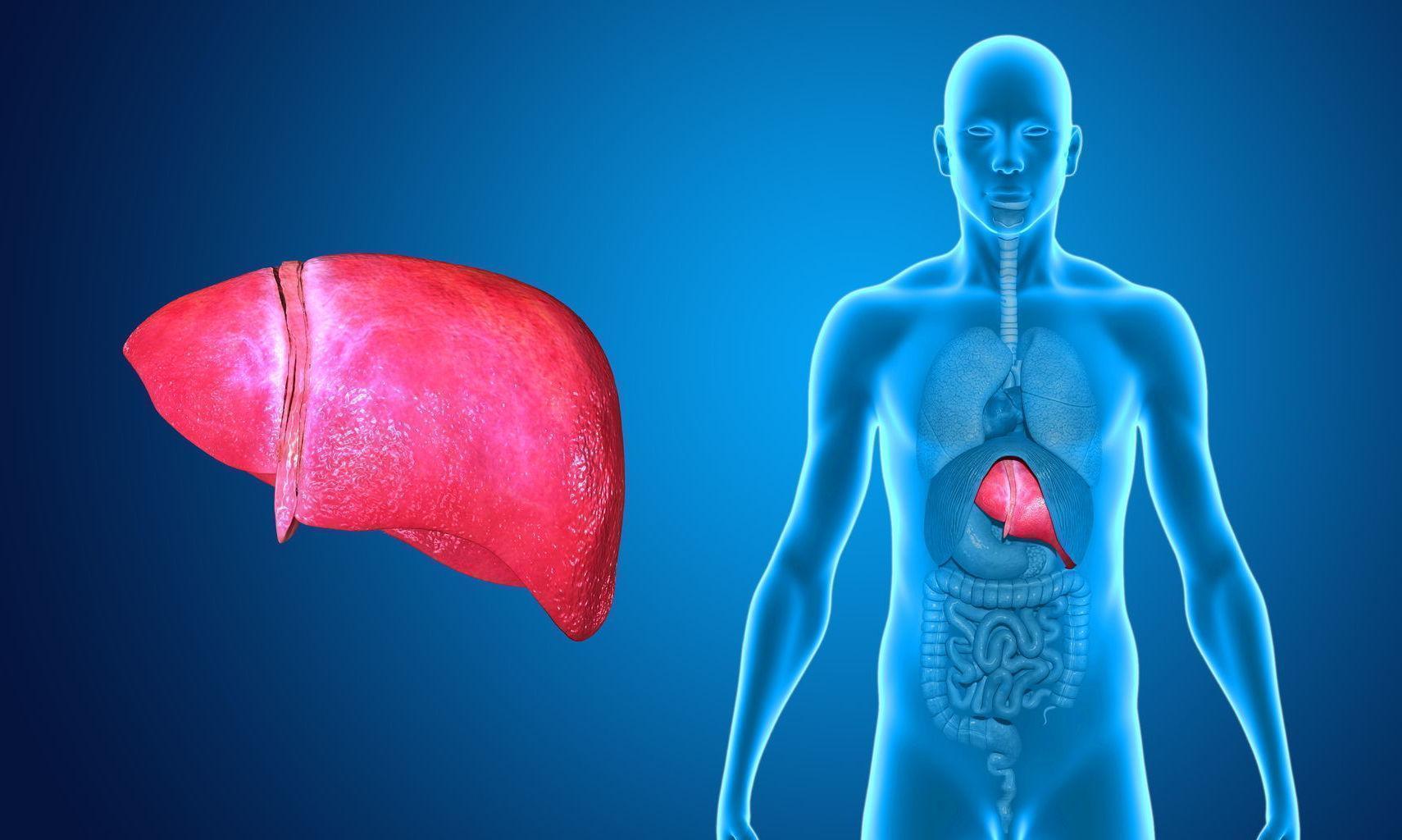 6 Sintomas Mais Comuns Que Indicam Que Seu Fígado Está Doente