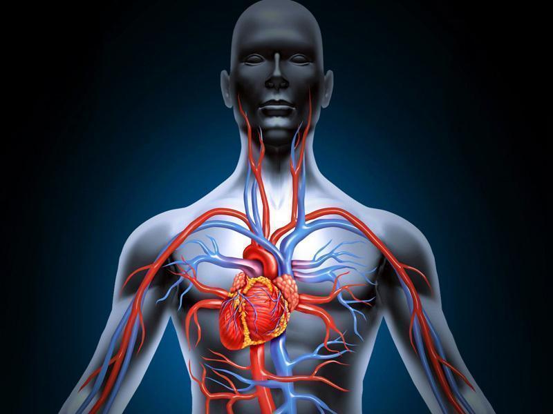 Angiografia Coronária: Uma Viagem Pelas Artérias do Coração