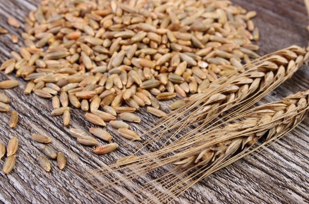 Centeio: Um Cereal Nutritivo e Saudável